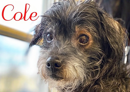 Pet Adoptions in Westport