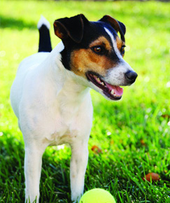 Westport Dog Boarding Kennel