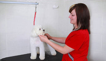 Westport Pet Grooming