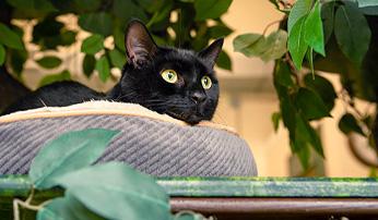 Cat Care and Boarding in Westport