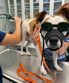 Therapeutic Laser Treatment